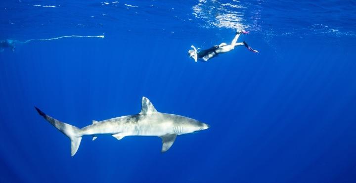 Shark Dive.JPG