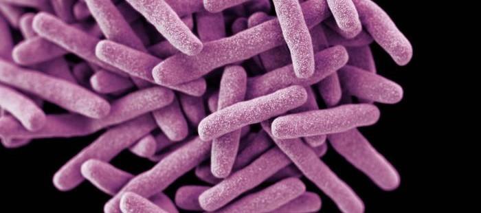 Mycobacterium-tuberculosis-700x310