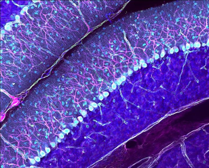 'Cellfie' of the Month: September 2019